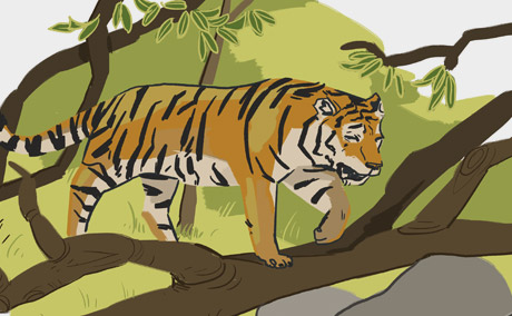 Tiger Illustration 003